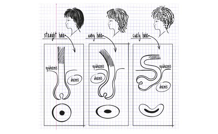 クセ毛と直毛の違い