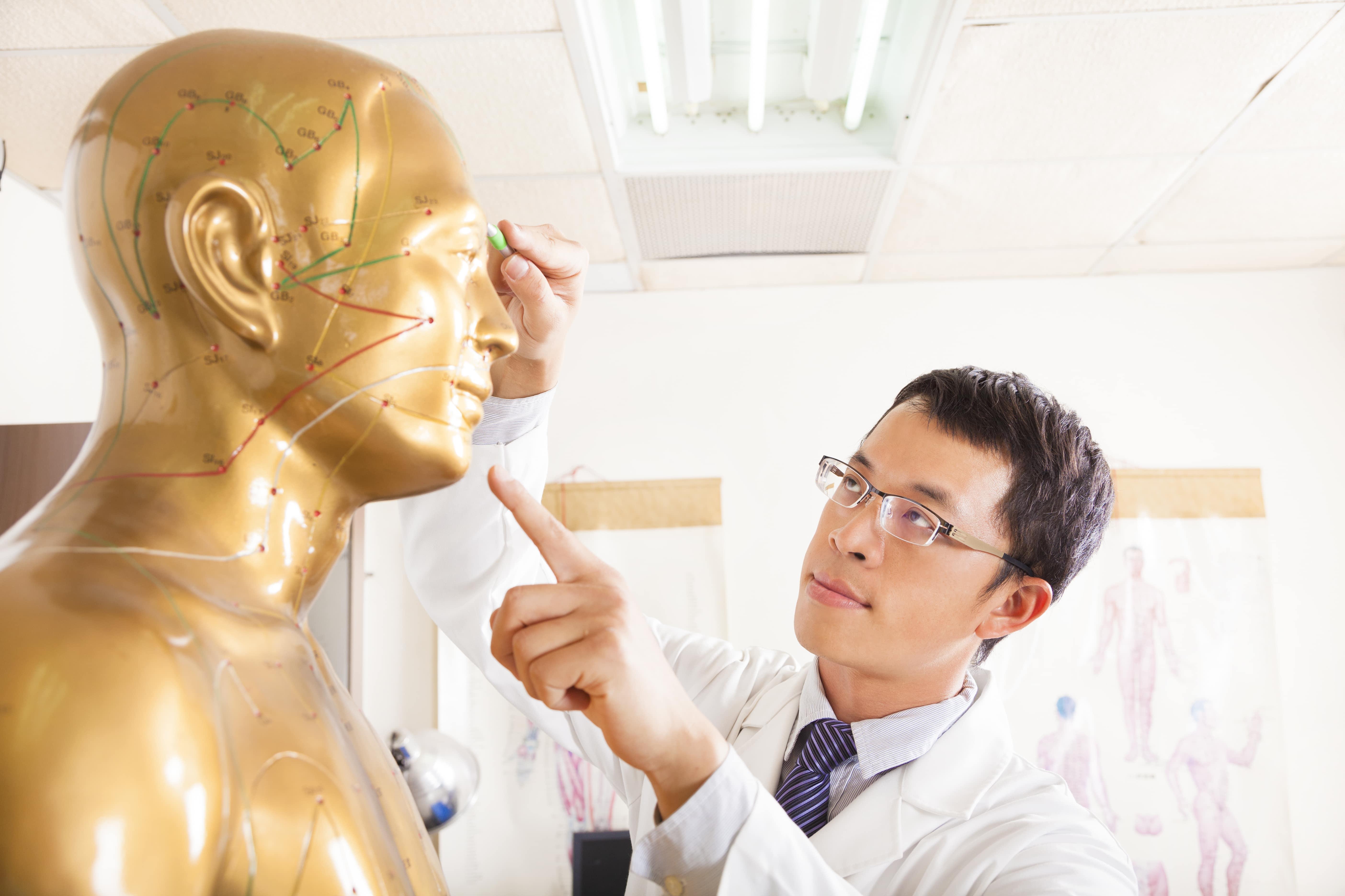 金の人体模型と男性医師