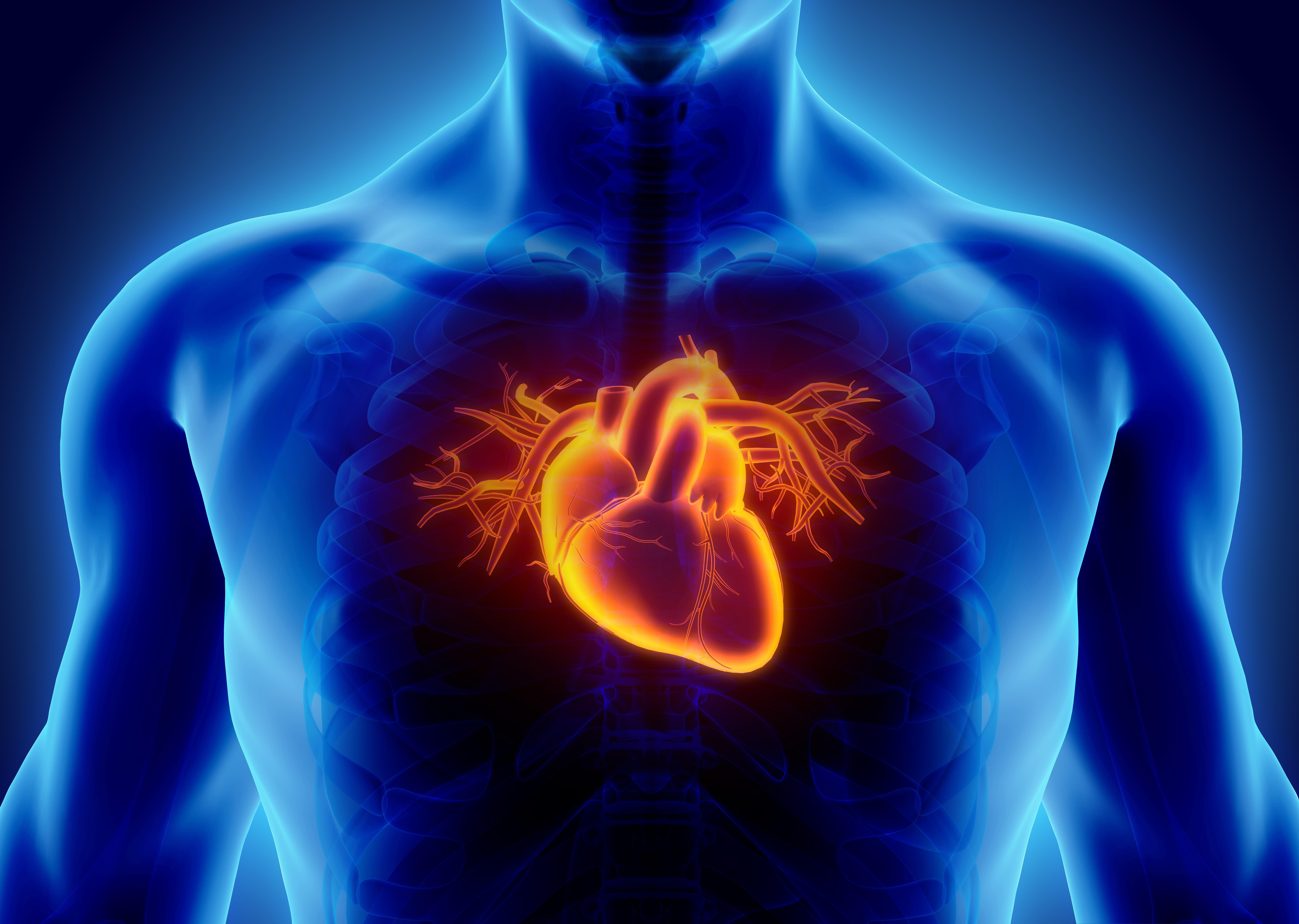 低体温について心臓と体
