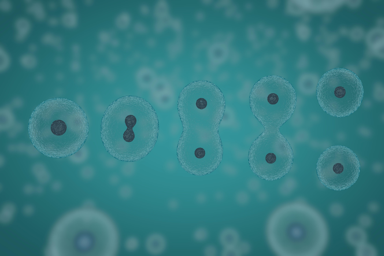細胞の増殖や分化