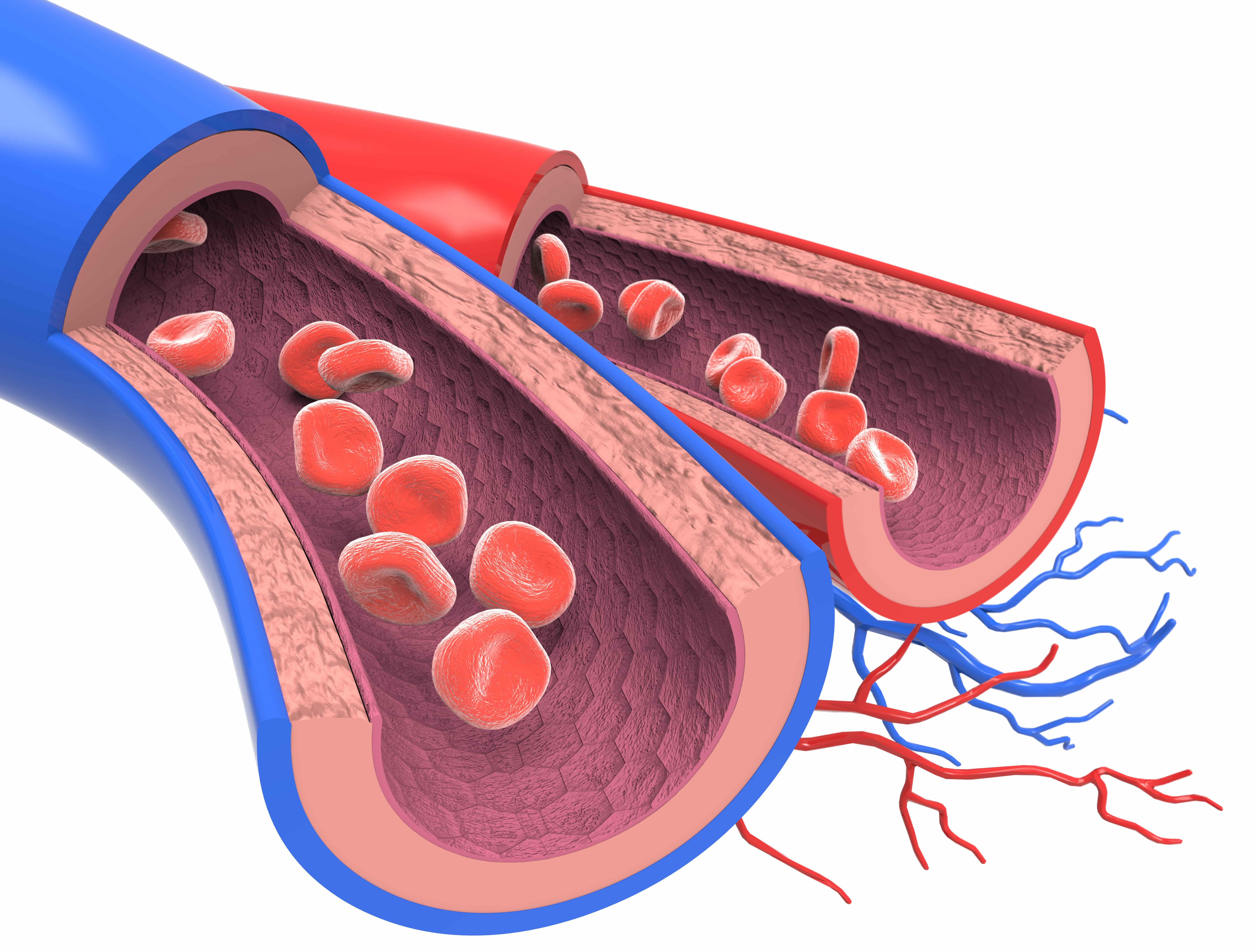 血管断面図