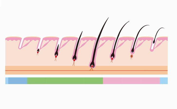 毛周期の異常