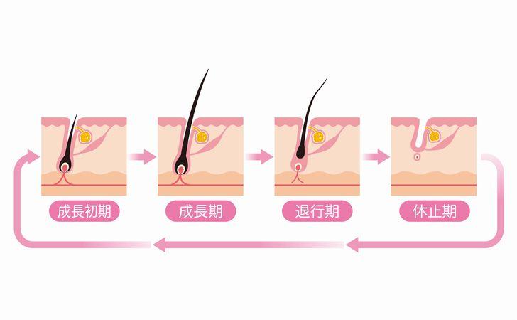 毛周期の図面
